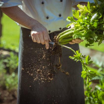 Verdure fresche orto
